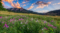 Boulder Flatirons and Wildflowers